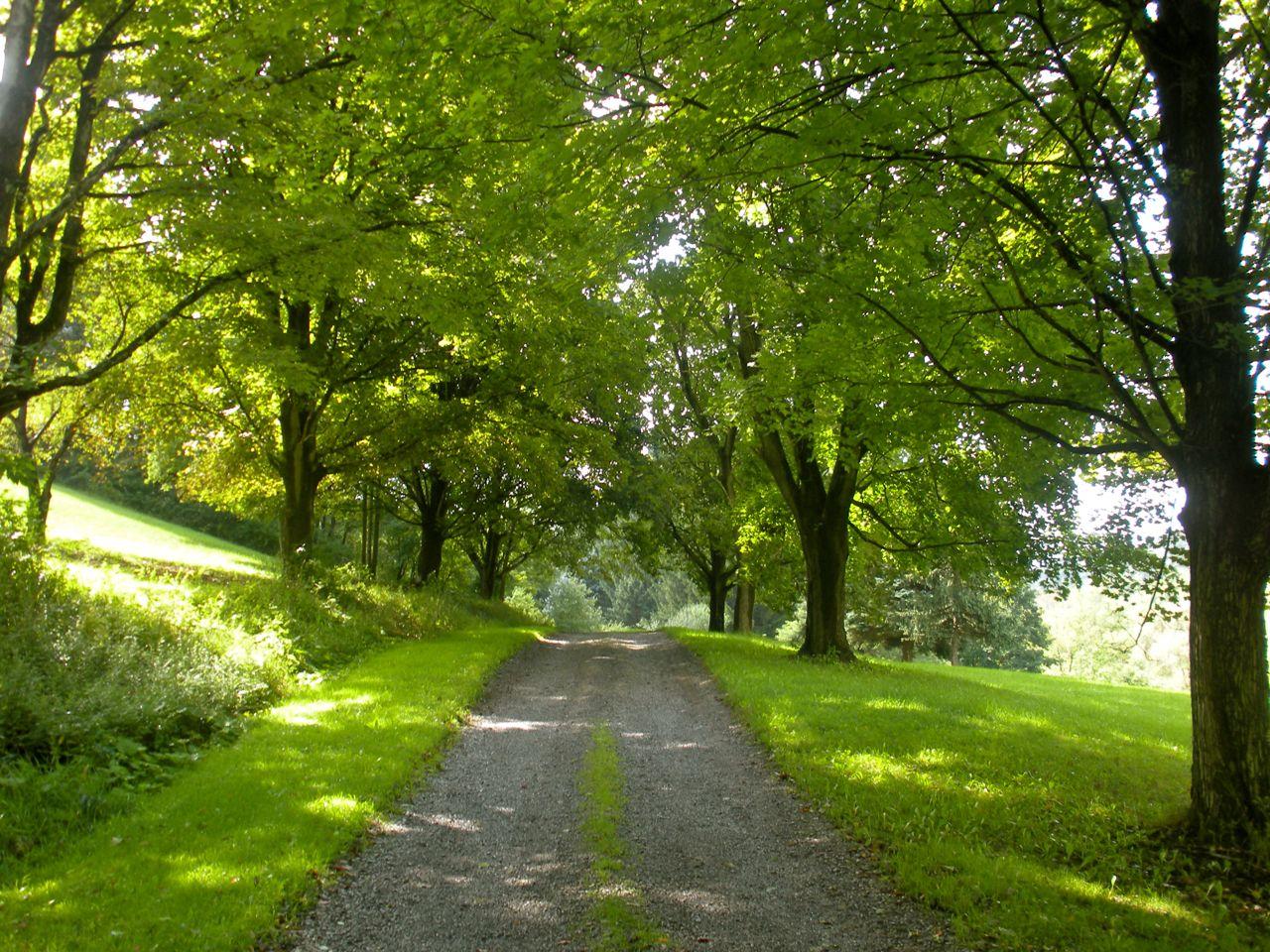 Spring Driveway1