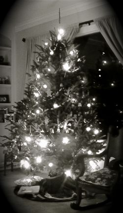 BW Christmas Tree